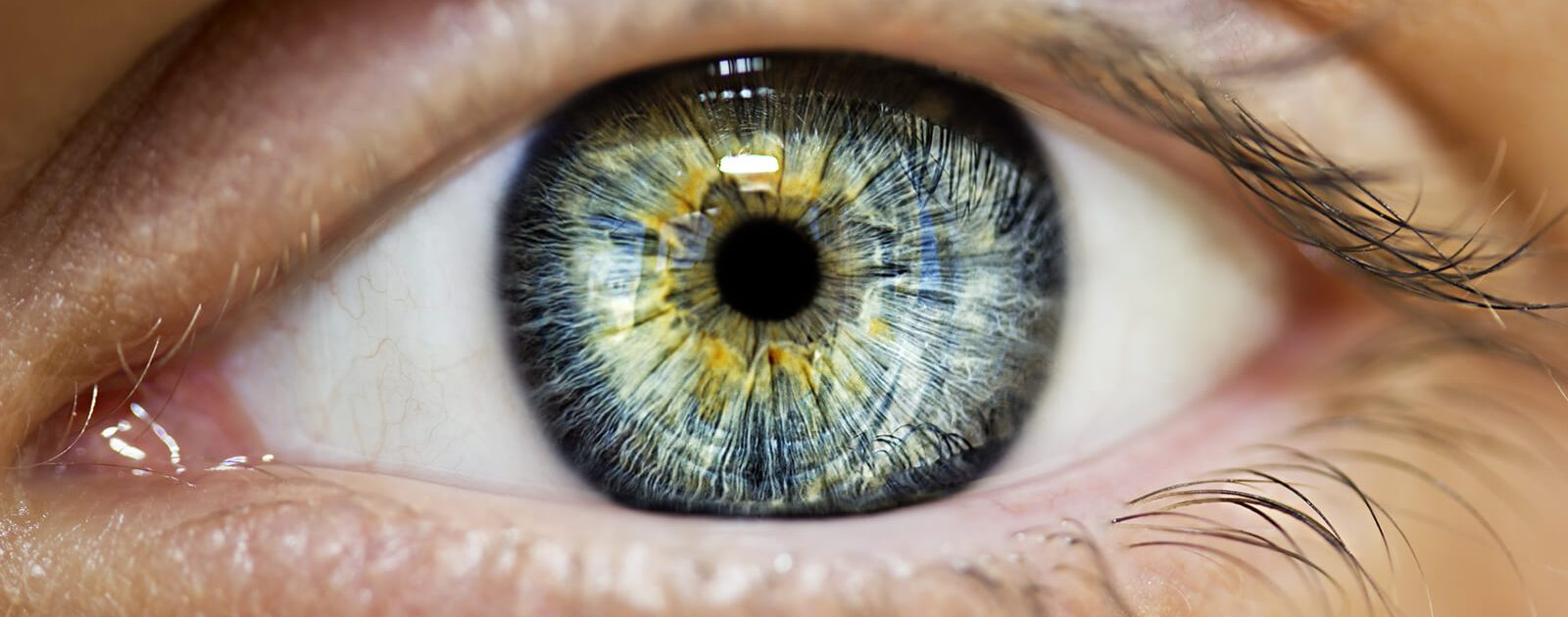 Das menschliche Auge: Pupille umgeben von der Iris